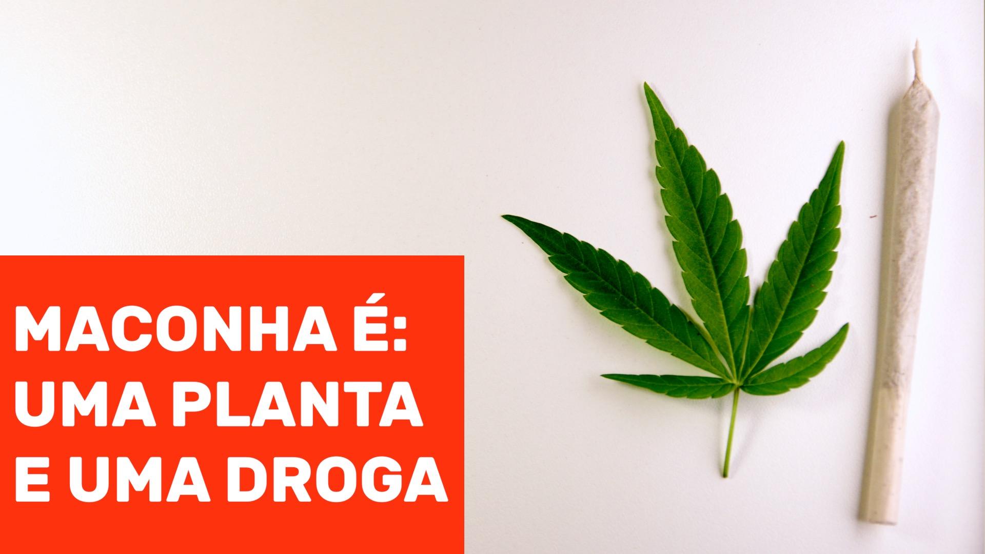 Série – Maconha é: Uma planta e uma droga